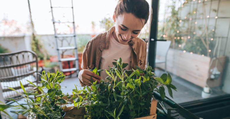 cultivar plantas en tu casa